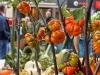 2019_10_12-Herbstmarkt_142
