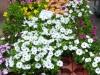 hildener-fruehling-45